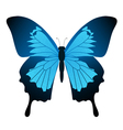 butterfly blue vector image