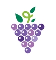 Bunches of ggrapes vector image vector image