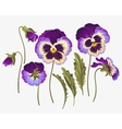 Set of pansy flowers vector image vector image