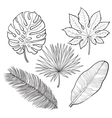 Set of tropical palm leaves sketch style vector image vector image