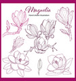 magnolia hand drawn collection vector image
