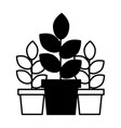 potted plants natural decoration ornament vector image