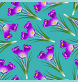 purple crocus flower on green teal background vector image vector image