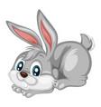 a happy rabbit vector image