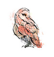 cute owl characters showing different vector image vector image