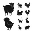 design of ranch and organic icon vector image