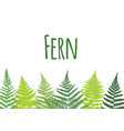 fern leaf background tropical botanical card vector image