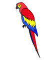 parrot on white background vector image vector image