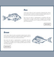 bass and bream seafood set vintage icons vector image