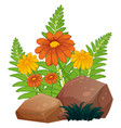 flowers and ferns on white background vector image vector image