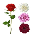 Set of pink white red rose top and side view vector image vector image