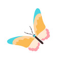 cute sticker colorful butterfly white vector image