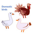 domestic birds turkey duck and goose on white vector image vector image