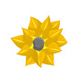 floral botanical flower yellow ornament vector image