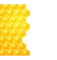 honey bee on white background vector image vector image