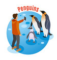 photo with penguins background vector image vector image