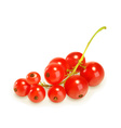Redcurrant berries vector image