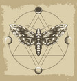 deaths head hawk moth in esoteric astrological vector image vector image