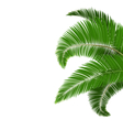 Green palm tree leaves isolated on white vector image vector image
