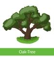 Oak-Tree cartoon icon vector image vector image