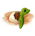 baby turtle coming out of shell vector image
