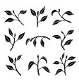 set silhouettes branches with leaves vector image vector image