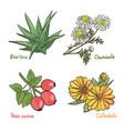 sketch of medicinal plants vector image vector image