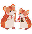 two hamsters eating almond vector image vector image