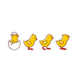 flat cute chick hatching vector image