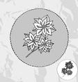 hand drawn poinsettia vector image vector image