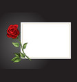 rose single flower on white background with black vector image vector image