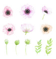 watercolor hand drawn anemone flower elements vector image
