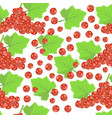 pattern with red currant vector image vector image
