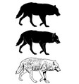 wolf silhouette and sketch vector image vector image