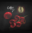 chalk drawn sketches set of coffee branch vector image vector image