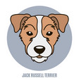 portrait jack russell terrier vector image