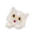 cute kitten with big beautiful eyes and fluffy vector image vector image