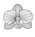 Exotic orchid drawing vector image vector image