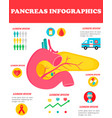infographic poster with pancreas vector image vector image