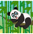 panda resting on branch among bamboo vector image
