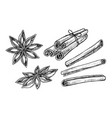 cinnamon and star anise isolated vector image