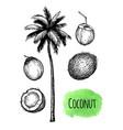 coconut palm tree vector image vector image