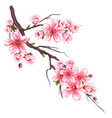 flowering sakura branch vector image
