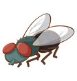 fly on white background vector image vector image