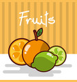 orange and lemon fruits fresh juicy collage vector image
