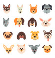 set cute dogs on a white vector image vector image