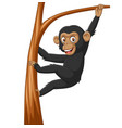 cartoon bachimpanzee hanging in tree branch vector image vector image