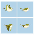 flying goldcrest female animation sprite sheet vector image vector image