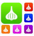 garlic set color collection vector image vector image