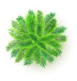 green palm tree 3d isolated vector image vector image